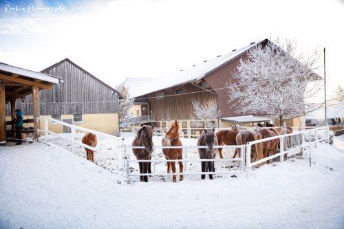 Burghauser_Schnee-22