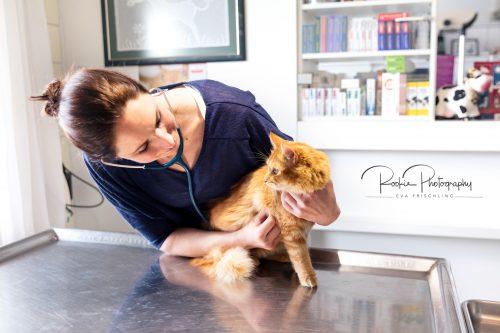 Tierarztpraxis Frankenmarkt-5