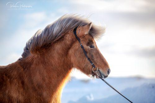 10 Verkaufspferde-Snilld1