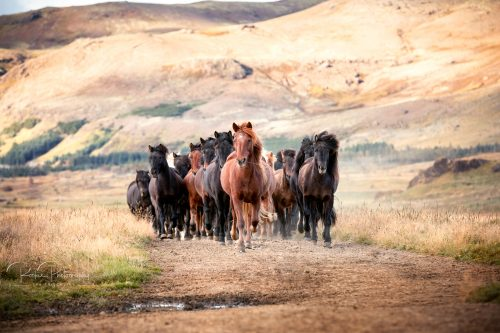 17 Workshop Herde im Freilauf-8
