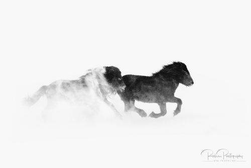 06 Hengstherde – Schneesturm-23