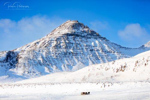 08 Herde am Berg-1