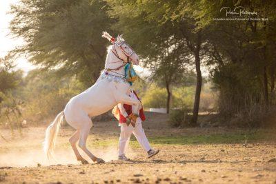 05 Tanz der Pferde-2