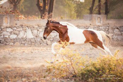 08 Pferde Freilauf-13
