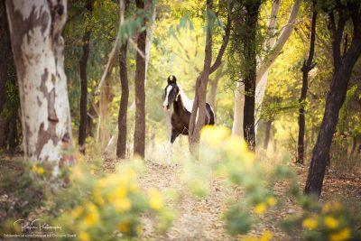 08 Pferde Freilauf-3