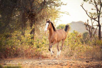 08 Pferde Freilauf-4