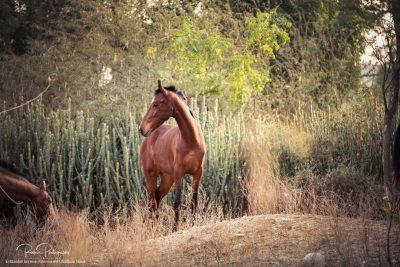 08 Pferde Freilauf-7