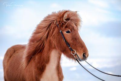 10 Verkaufspferde-9