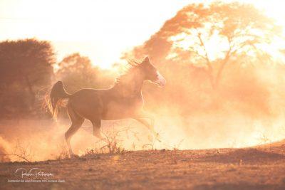 17 Pferde bei Ute-11