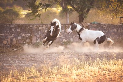 17 Pferde bei Ute-2
