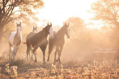 17 Pferde bei Ute-5