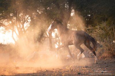 17 Pferde bei Ute-7