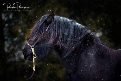 APRanch_1_Portrait-9