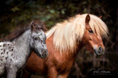 Fiona & Blue-5