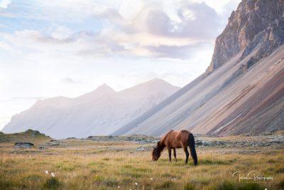IslandpferdeInIsland-1