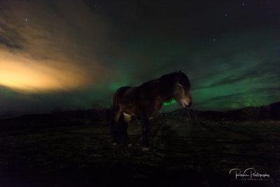 IslandpferdeInIsland-100