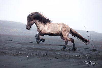 IslandpferdeInIsland-105