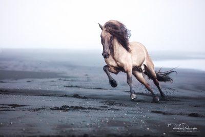 IslandpferdeInIsland-106