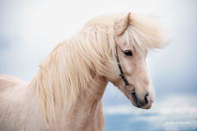 IslandpferdeInIsland-113