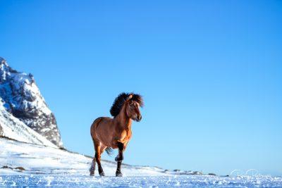 IslandpferdeInIsland-123