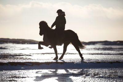 IslandpferdeInIsland-127