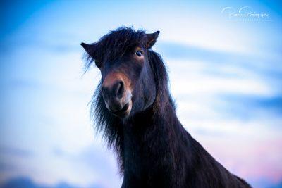 IslandpferdeInIsland-137