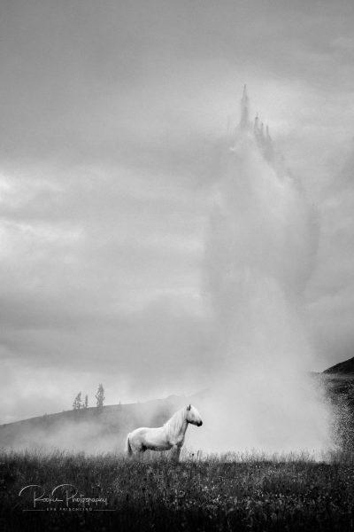 IslandpferdeInIsland-139