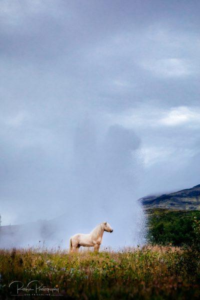 IslandpferdeInIsland-140