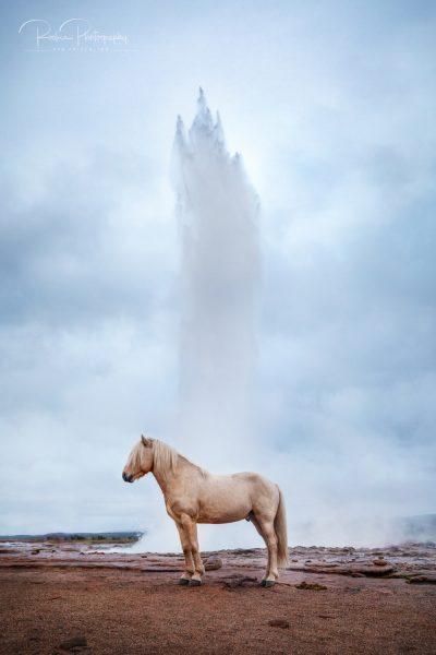 IslandpferdeInIsland-141