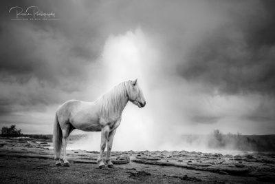 IslandpferdeInIsland-142