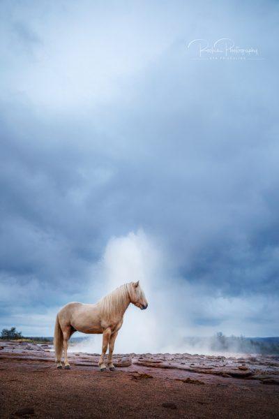 IslandpferdeInIsland-143