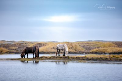 IslandpferdeInIsland-145