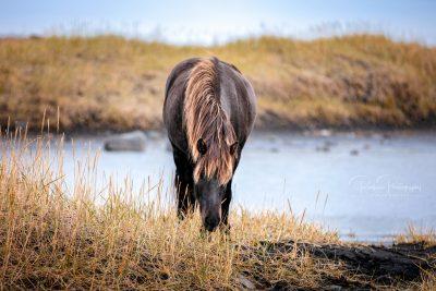 IslandpferdeInIsland-146