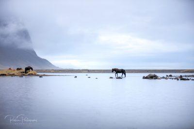 IslandpferdeInIsland-149