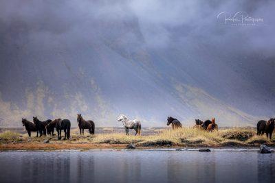 IslandpferdeInIsland-150