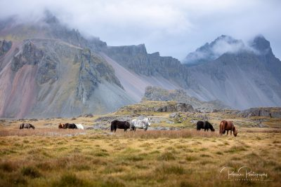 IslandpferdeInIsland-166