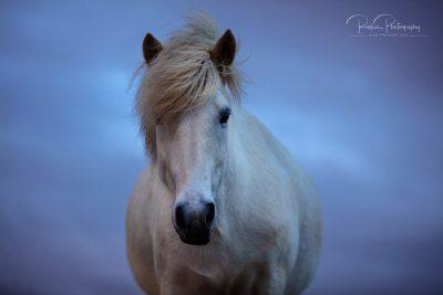 IslandpferdeInIsland-172