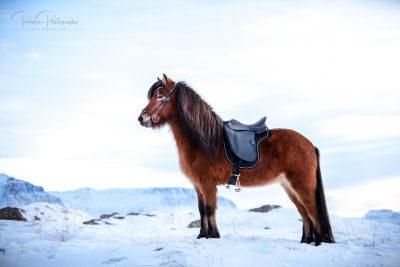 IslandpferdeInIsland-173