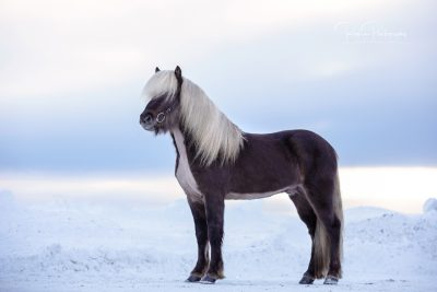 IslandpferdeInIsland-176