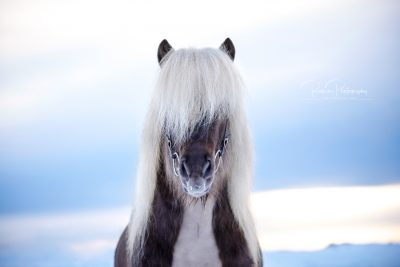 IslandpferdeInIsland-177