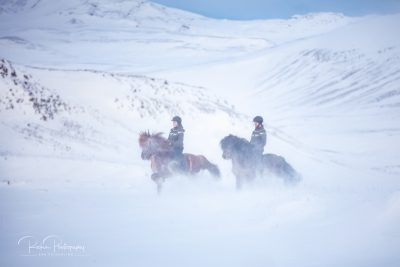 IslandpferdeInIsland-179