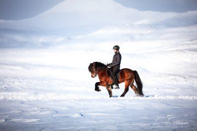 IslandpferdeInIsland-182