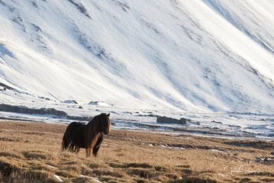 IslandpferdeInIsland-25