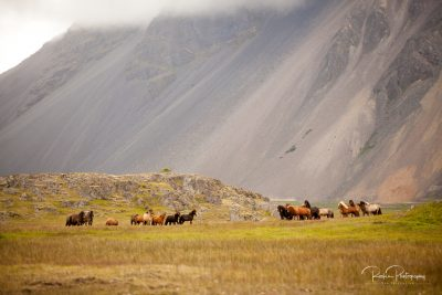 IslandpferdeInIsland-43