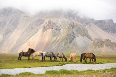 IslandpferdeInIsland-49