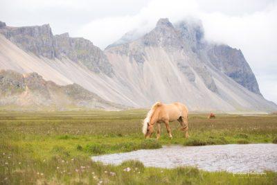 IslandpferdeInIsland-50
