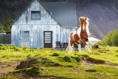 IslandpferdeInIsland-66