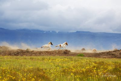 IslandpferdeInIsland-71