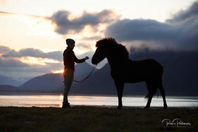 IslandpferdeInIsland-77