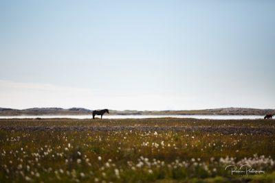 IslandpferdeInIsland-79